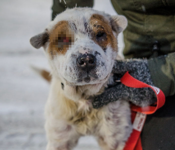 This Dog Was Taken Away From Owners Who Kept Him In Horrible Conditions, Gets A Forever Home