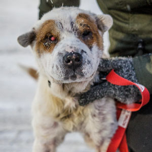 This Dog Was Taken Away From Owners Who Kept Him In Horrible Conditions Gets A Forever Home