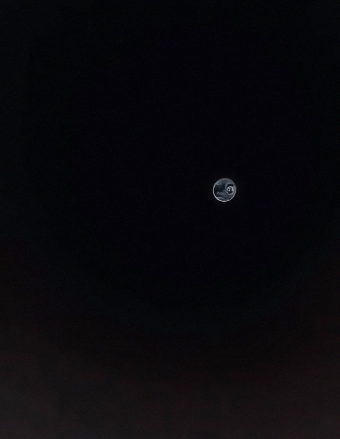 Better Yet. Take A Pic Of Your Frenchie Moon