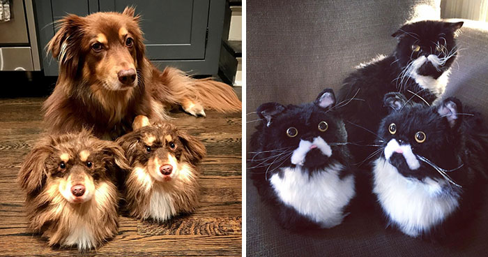 This Company Makes Slippers That Look Just Like People's Pets And They Are So Realistic That Dogs Get Jealous