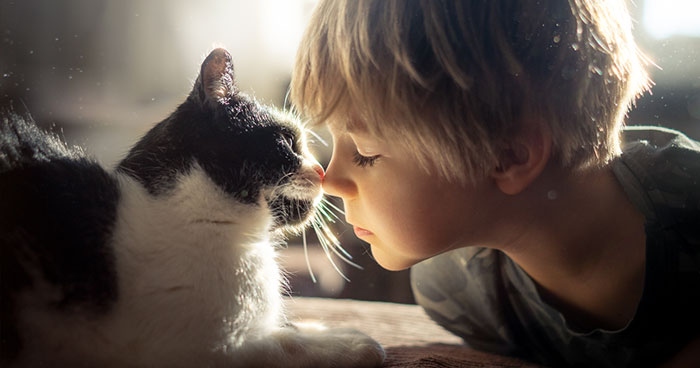 My Cats Are Afraid Of Kids Except For My Son So I Decided To Capture Their Bond (20 Pics)