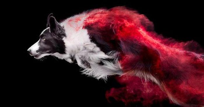 Les arrojé polvos de colores a unos perros y el resultado es increíble (13 imágenes)