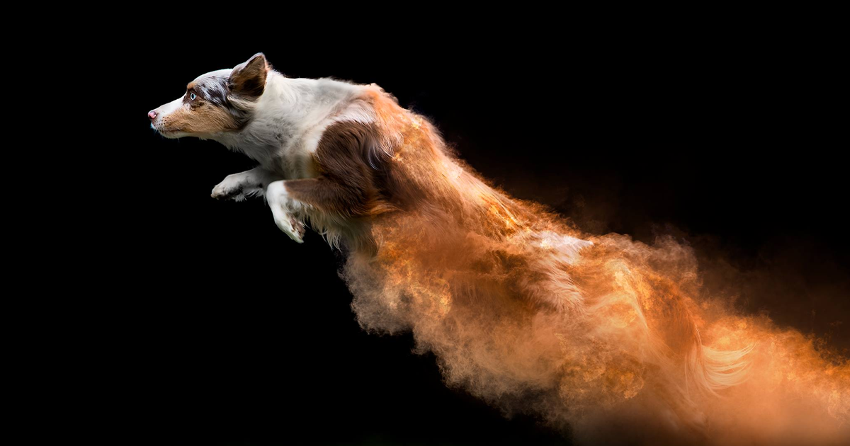I Tossed Powder On Some Dogs And The Result Turned Out Amazing 13 Images Bored Panda