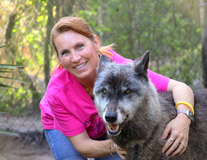 Owner Dumped Wolfdog At Kill Shelter When He Got Too Much To Handle