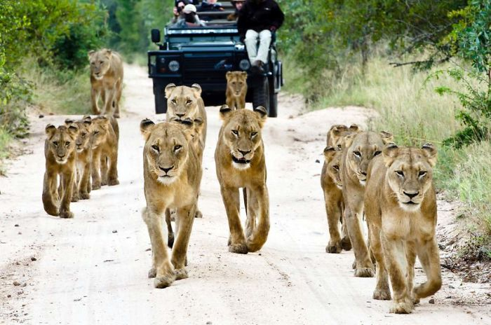 An African Safari Explained In 3 Amazing Photos