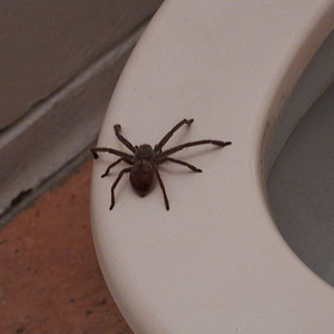 This Australian Shares Hilariously Horrifying Story About How He Was 'Harassed' By A Spider In The Bathroom At Work