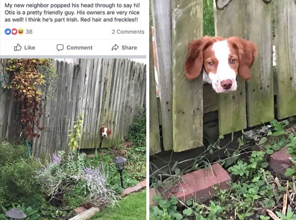 I Was Creeping My Next Door Neighbors Facebook And Stumbled Upon This Photo Of My Dog