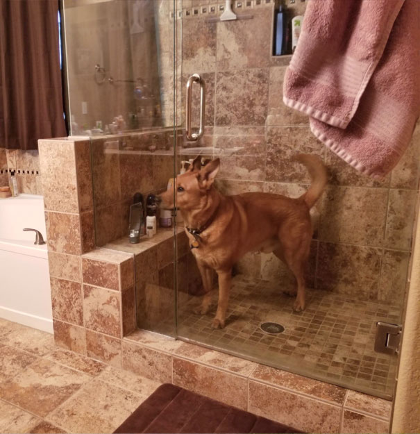 Trapped Himself In The Shower At Some Point During The Night. Woke Up To Scared Whining