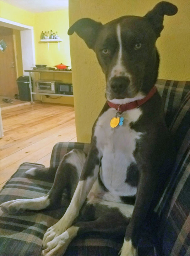 """My Dog Sits Next To Me When I'm On The Couch And Looks At Me Like We Need To Have """"The Talk"""""""