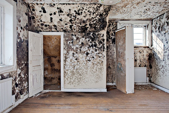After The Great Plague Of 1665, Came The Less Famous Bubonic Bedroom Blight Of 1704
