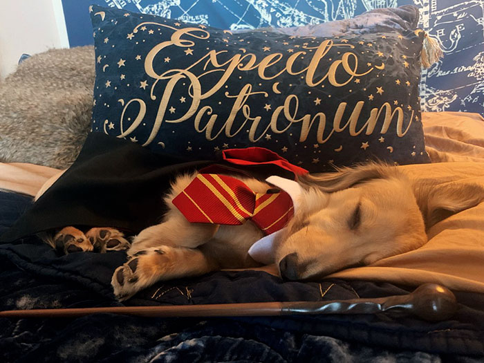 This Dog Was Trained To Respond To Harry Potter Spells And