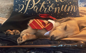 This Dog Was Trained To Respond To Harry Potter Spells And He's Probably The Cutest Hogwarts Student Ever