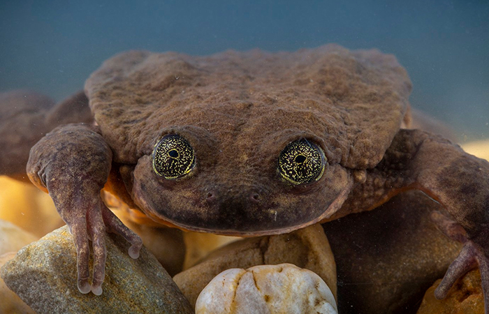 World's Loneliest Frog Has Found A Match After 10 Years, And They Might Be Saving Their Species