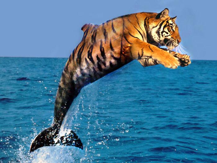 Tiger + Dolphin