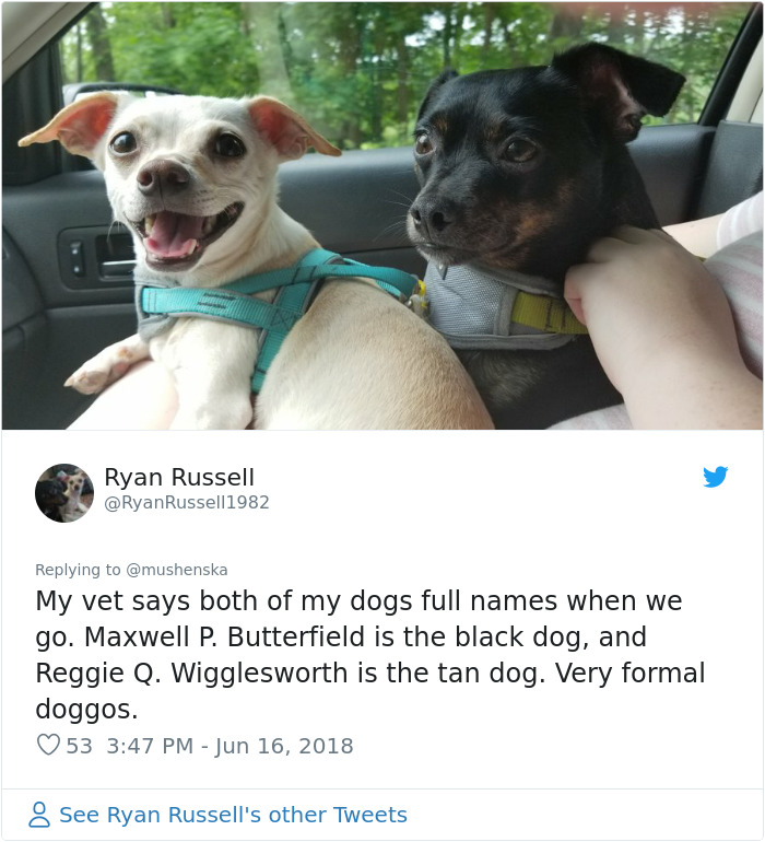 46 People Share The Funniest Pet Names And They're Beyond