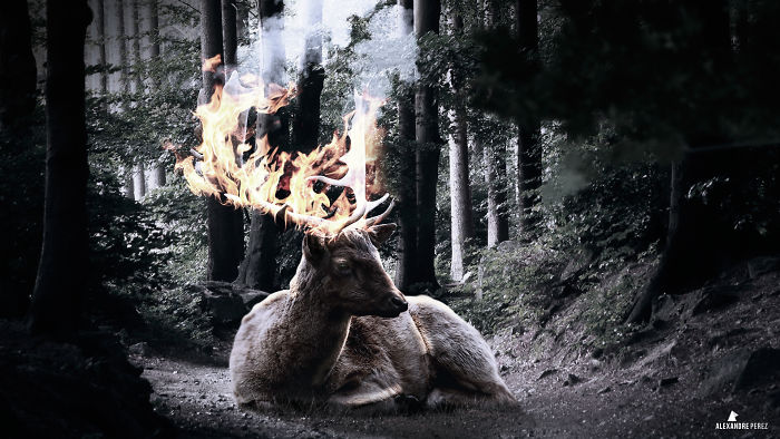Deer In Flames