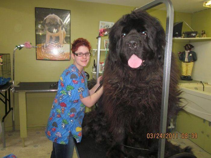 It's A Bear! It's A Mammoth! No It's Giant Dog!