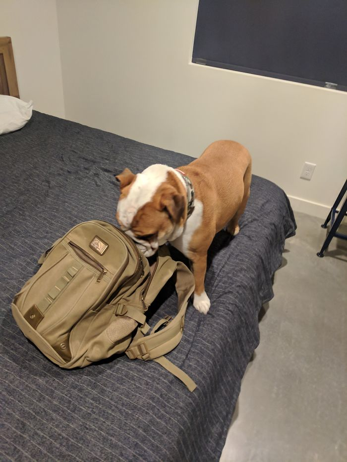 My Airbnb Comes With It's Own Drug Sniffing Dog