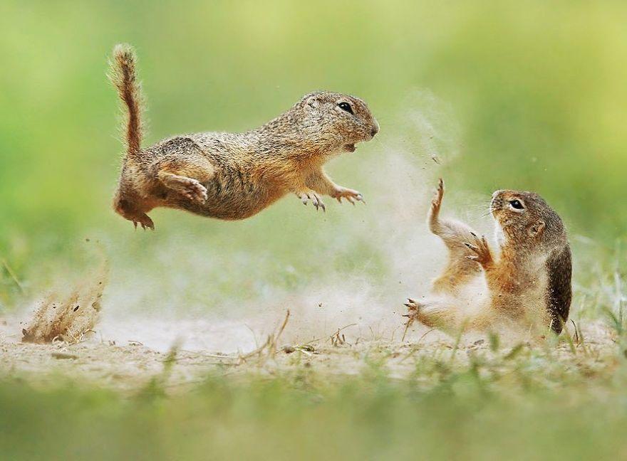 Kung Fu écureuils
