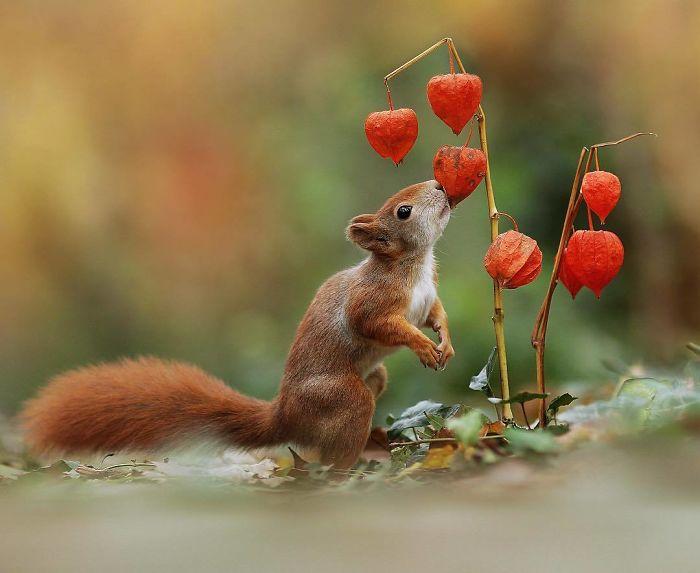 Colores bellos de otoño