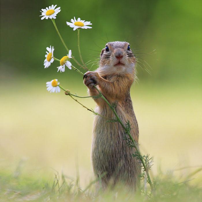 Un puñado de flores