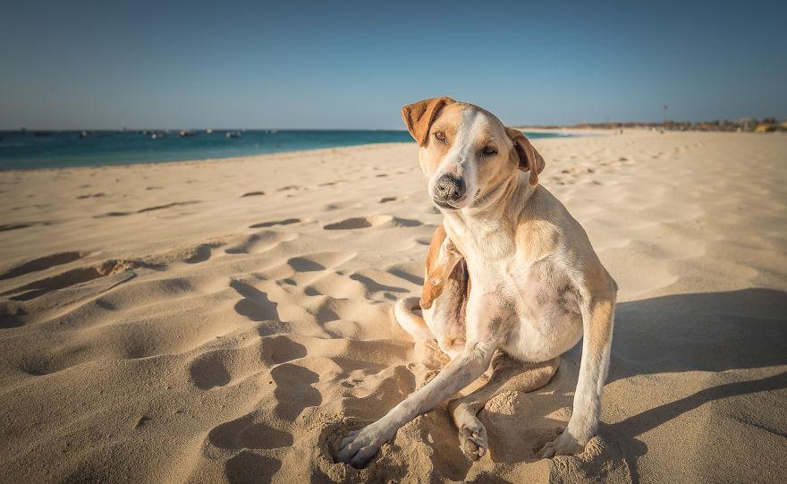 A Good Scratch On The Beach