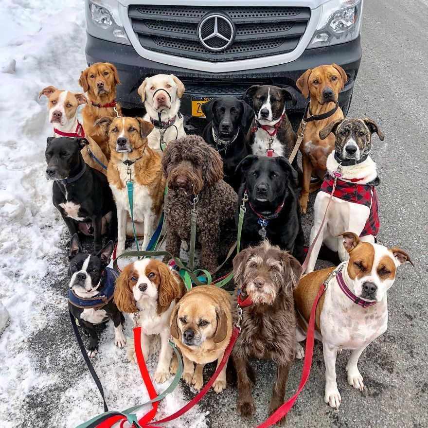 These Lovely Dogs 'Pack Walk' And Pose For Pictures ...