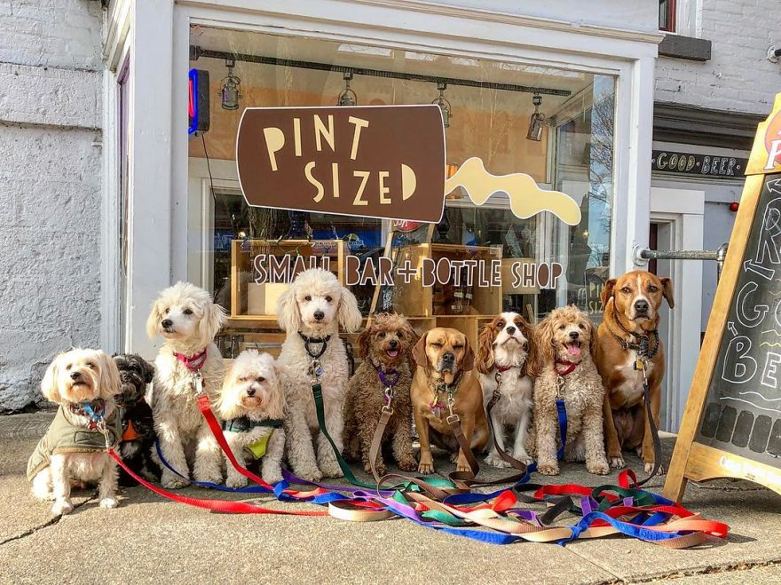 These Lovely Dogs 'Pack Walk' And Pose For Pictures Together Every Day