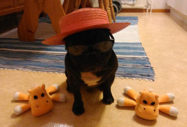 Fonzie-Bulldog-5c584d04b6282.jpg