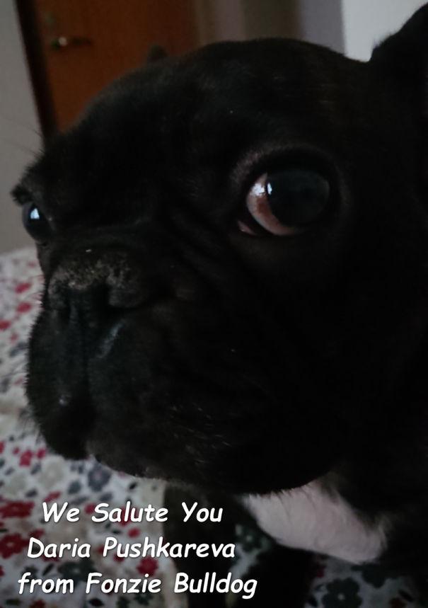 Fonzie-Bulldog-Salute-Daria-Pushkareva-5c6bd95266dfc-png.jpg