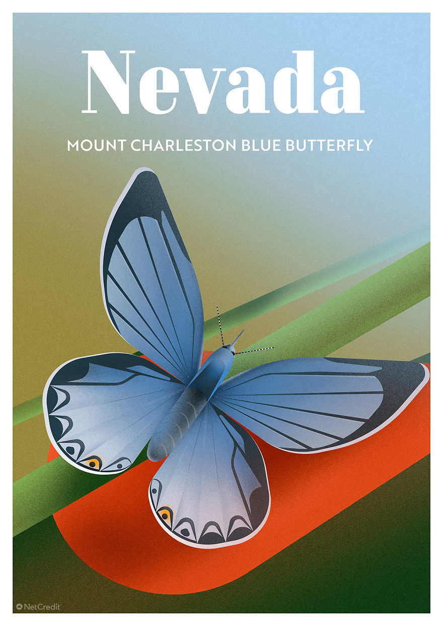 Mount Charleston Blue Butterfly