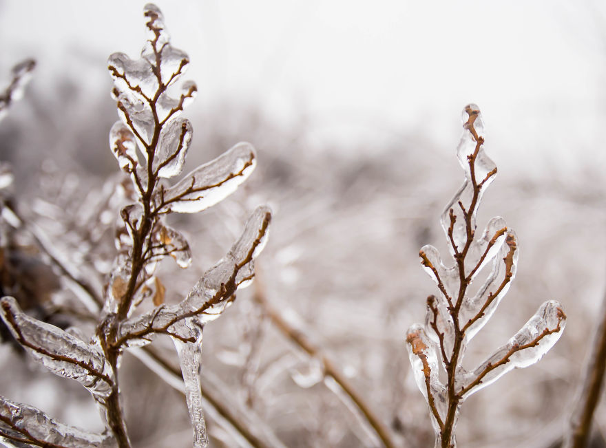 I Photographed Freezing Rain, Alternately Beautiful And Scary