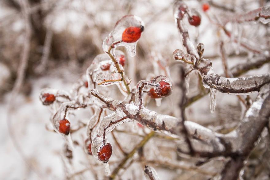 I Photographed Freezing Rain, Alternately Beautiful And Scary