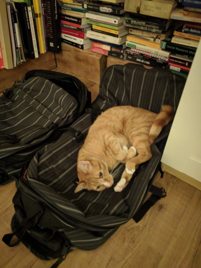 Airbnb In Amsterdam Weeeell We Can't Go Back Home Now. Cats And Their Bags!