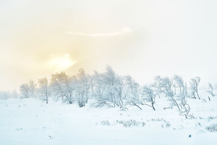 I Capture The Beautiful Winter In The Northern Part Of Sweden