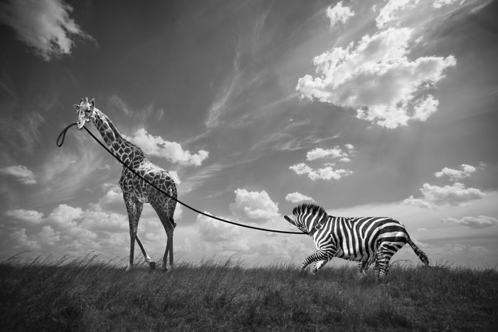 Photographer Shows The Funny Life Of Animals From Kenya
