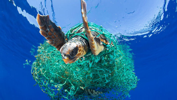 What Is The Great Pacific Garbage Patch, Anyway?