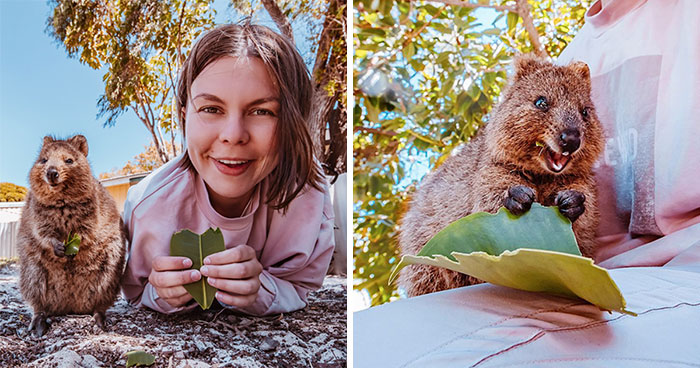 I Flew 25 Hours To Australia Just To See The Cutest Animals In The World – Quokkas