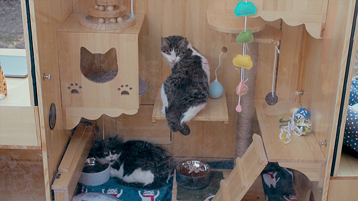 Computer Engineer Created An AI Shelter That Takes Care Of 174 Cats, And Even Has A Facial Recognition System