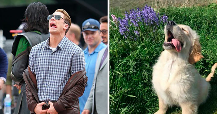 This Twitter Account Is On A Mission To Prove That Chris Evans Is A Golden Retriever, And Already Has 55K Supporters