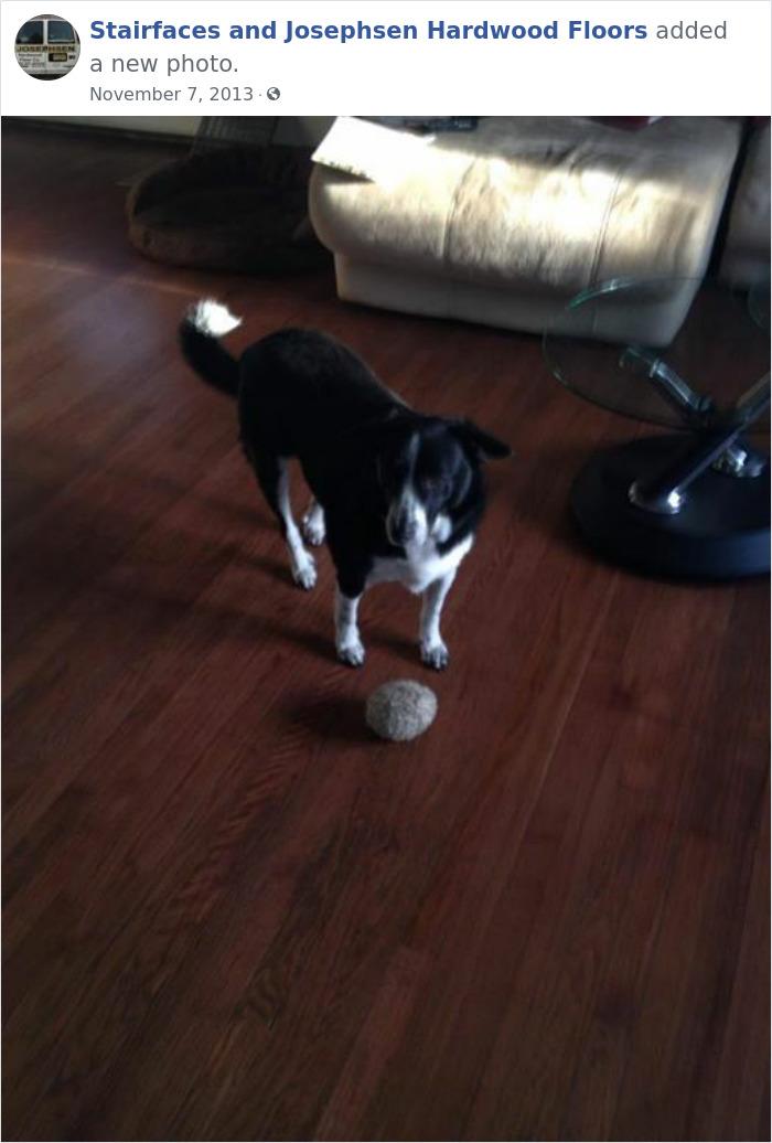 Dogs-Employees-Of-The-Week-Josephsen-Hardwood-Floor