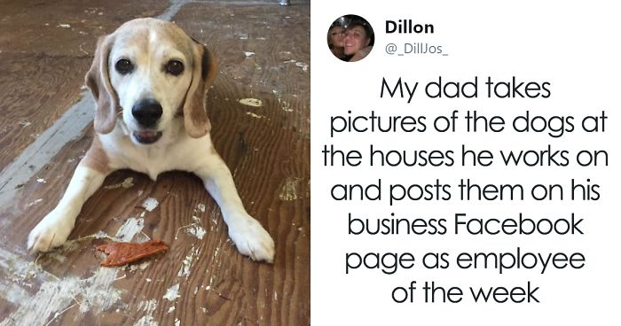 30 Adorable 'Employees Of The Week' That This Contractor Met At The Houses He Works At