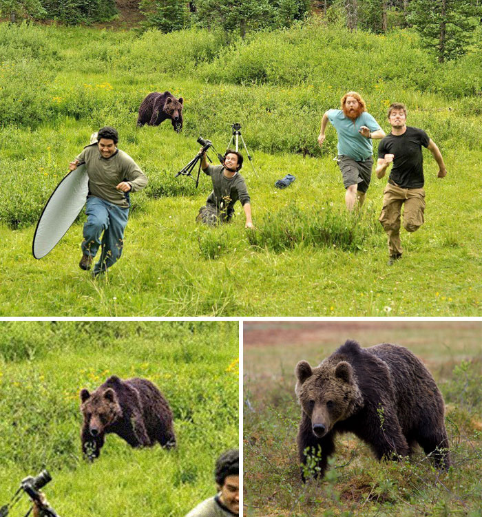 Bear Chasing National Geographic Photographers