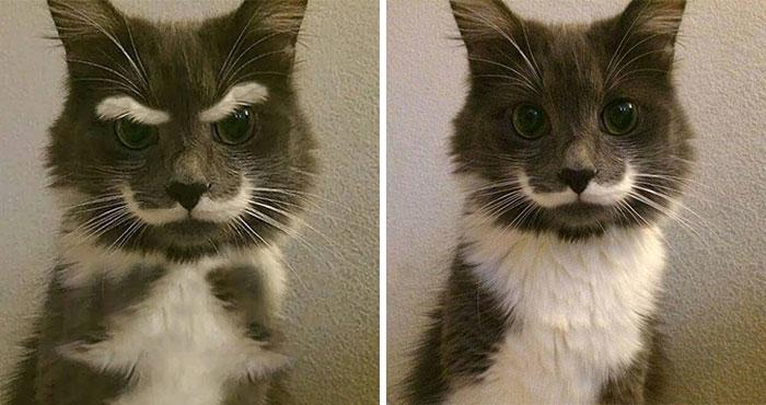 Como el bigote no era bastante, le añadieron cejas