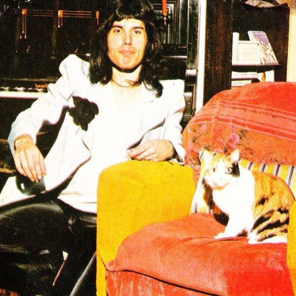20 Pics Of Freddie Mercury And His Cats That He Loved And Treated