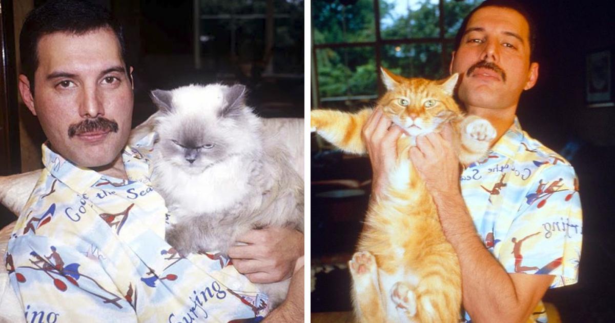 20 Vintage Photos Of Freddie Mercury And His Beloved Cats | Bored Panda
