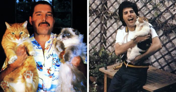 Freddie Mercury Treated His Cats Like Queens And At One Point Of His Life Had 10 Of Them
