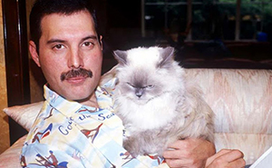 20 Pics Of Freddie Mercury And His Cats, That He Loved And Treated Like His Own Children