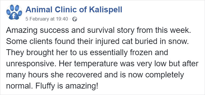 Cat Frozen In Snow Makes Miraculous Recovery After Veterinarians Spend Hours Fighting For Her Life