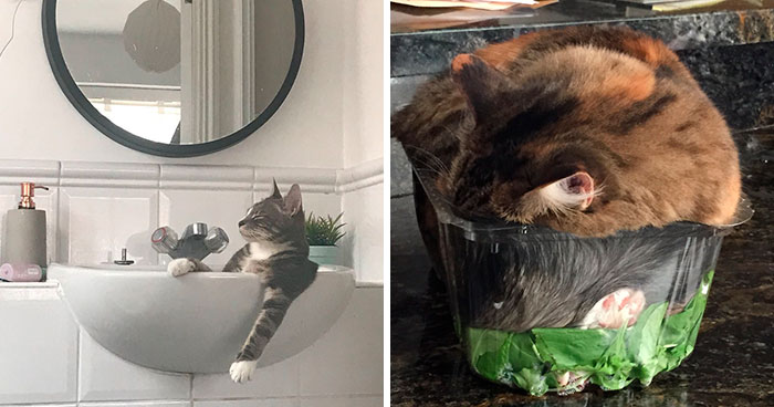 Funny Cats Sleeping In Weirdest Positions Ever